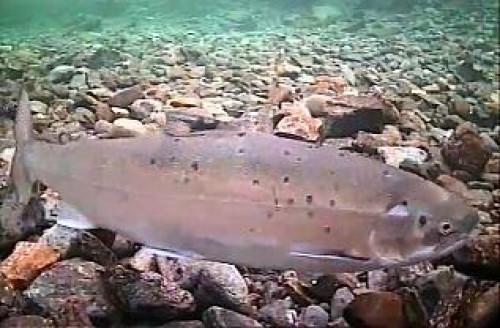 FISKE I SNEFJORDVASSDRAGET 2020
