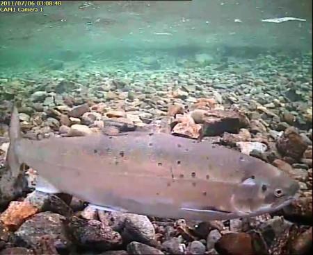 FISKE I SNEFJORDVASSDRAGET 2016